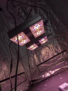 Die LED-Pflanzenlampe GC-Wifi von Greenception  wird im Growzelt getestet.
