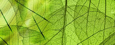 Pflanzen Blattstruktur