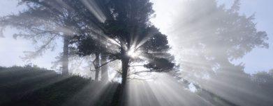 licht im wald pflanzenlampe