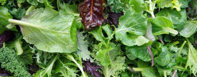 Verschiedene Sorten frischen Salats