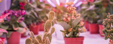 Praxistipps zur Pflanzenzucht