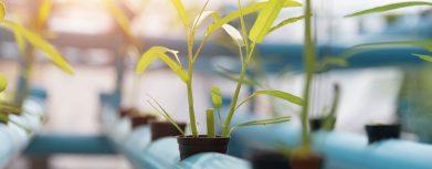 Wie lange sllten Pflanzen mit LED Grow Lampen beleuchtet werden?